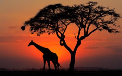 'A giraffe just needs to be a giraffe'